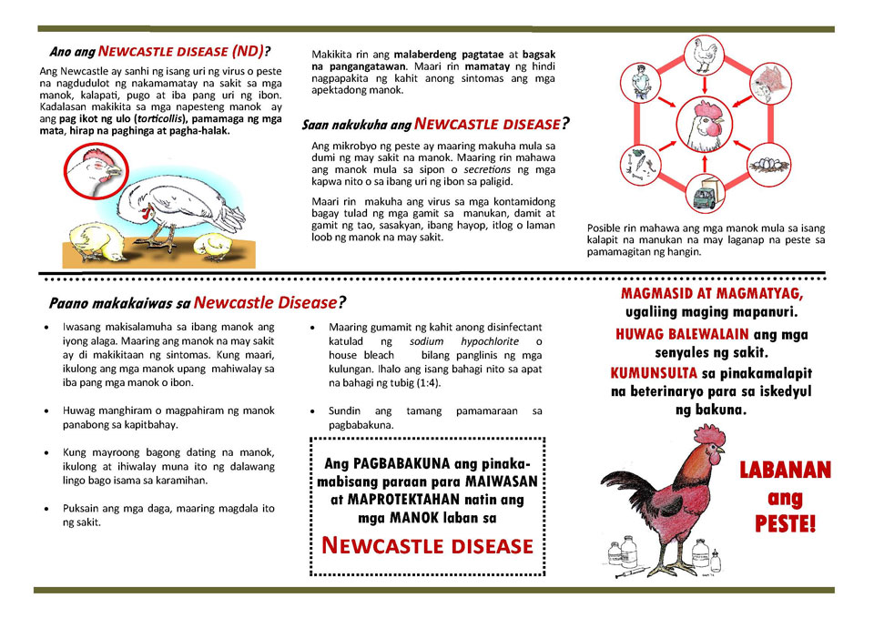 Download the NCD Prevention Flyer
